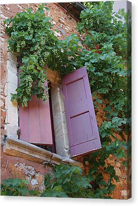 Shutters And Grapevines Canvas Print by Sandra Anderson