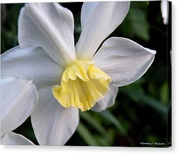 Shy Daffodil Canvas Print