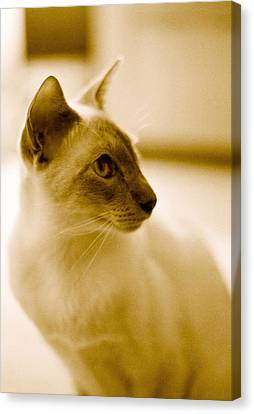 Siamese Feline Canvas Print by Lenny Carter