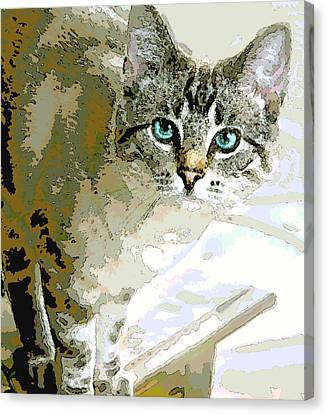 Siamese Mix Kitten Canvas Print by Dorothy Walker