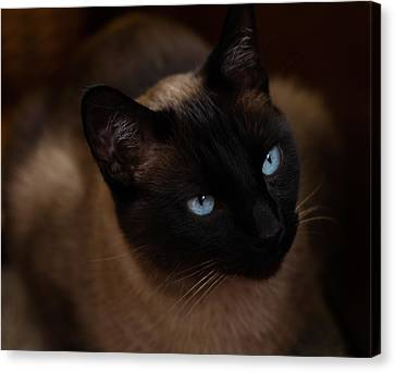 Siamese Canvas Print by Tim Reaves