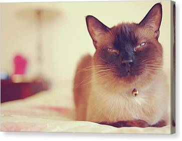 Siamese Canvas Print by Trista Watson Photography