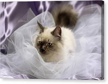 Siberian Kitty On Lilac Canvas Print