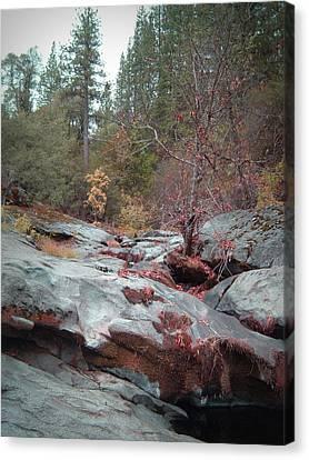 Sierra Nevada Forest 1 Canvas Print by Naxart Studio