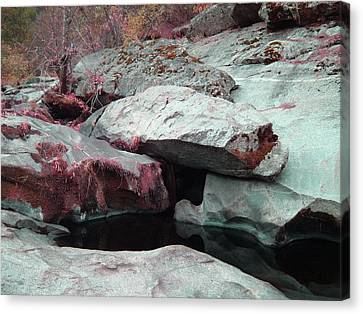 Sierra Nevada Forest Canvas Print