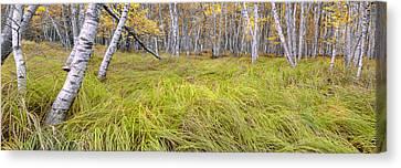 Sieur De Monts Forest - Acadia National Park Canvas Print