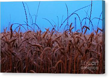 Sign Of The Times Canvas Print by Lisa Holmgreen