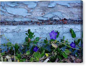 Signs Of Spring Canvas Print by Vicki Pelham