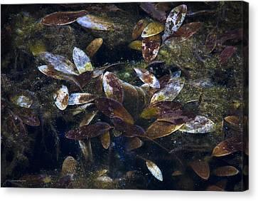 Silent Fall Canvas Print by Ron Jones
