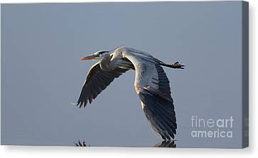 Silent Flight Canvas Print by Ursula Lawrence