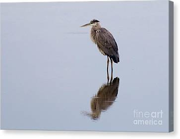 Silent Reflection Canvas Print by Ursula Lawrence