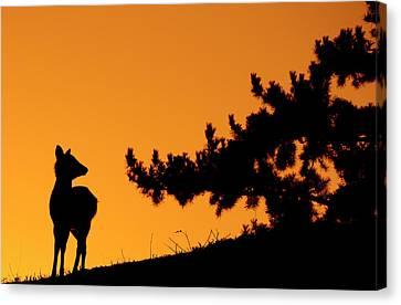 Silhouette Deer Canvas Print by Onejoshuatree
