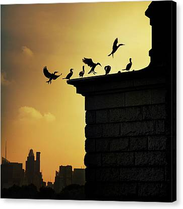 Silhouettes Of Cormorants Canvas Print by Istvan Kadar Photography