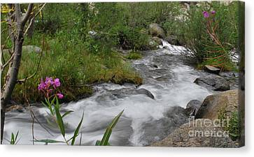 Canvas Print featuring the photograph Silky Smooth by Johanne Peale