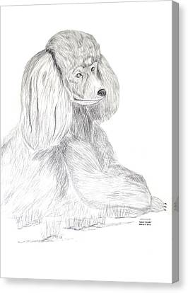 Canvas Print featuring the drawing Silver Poodle by Maria Urso