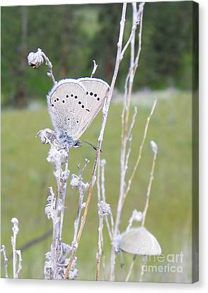 Silver Side Of Blue Canvas Print by KD Johnson