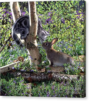 Silver Tabby And Wild Rabbit Canvas Print