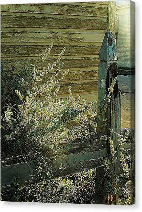 Canvas Print featuring the photograph Silverleaf In Morning Sun by Louis Nugent
