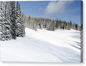 Silverstar Meadow Snow Covered Alpine Meadow Silver Star Canvas Print by Andy Smy