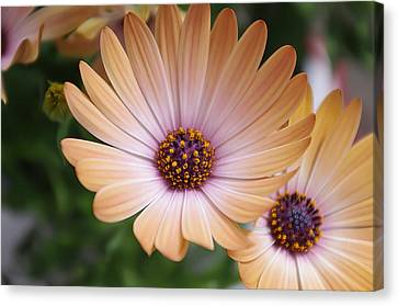 Simple Beauty Canvas Print by Michael Krahl