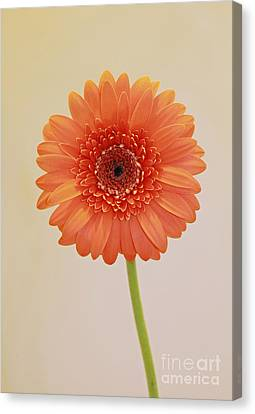 Simple Pleasures Canvas Print by Inspired Nature Photography Fine Art Photography