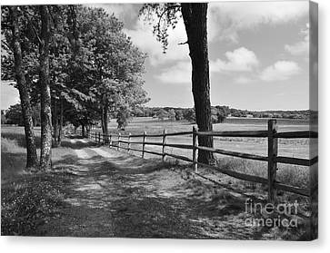 Simple Times Canvas Print by Catherine Reusch Daley