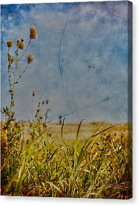 Singing In The Grass Canvas Print by Empty Wall