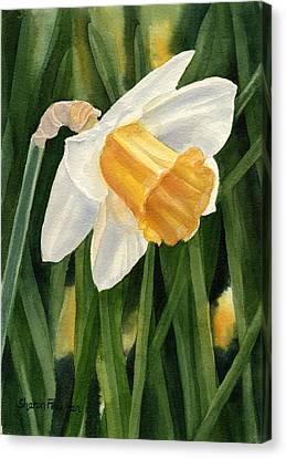 Single Yellow Daffodil Canvas Print by Sharon Freeman