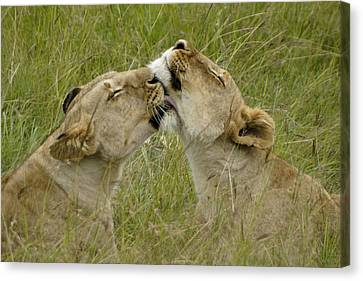 Sisterly Love Canvas Print by Michele Burgess