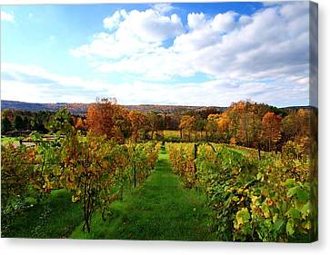 Six Miles Creek Vineyard Canvas Print by Paul Ge