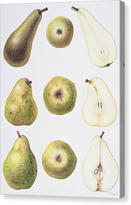 Six Pears Canvas Print by Margaret Ann Eden