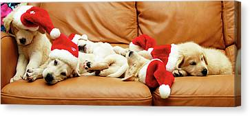 Six Puppies Sleep On Sofa, Some Wear Santa Hats Canvas Print by Karina Santos