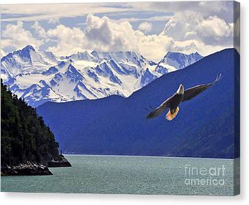 Skagway Bald Eagle Canvas Print
