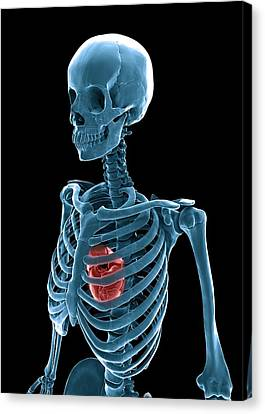 Skeleton And Heart, Artwork Canvas Print by Andrzej Wojcicki