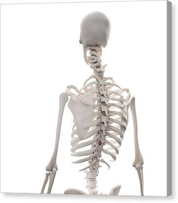Skeleton, Artwork Canvas Print by Andrzej Wojcicki