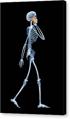 Skeleton Using A Mobile Phone Canvas Print by D. Roberts