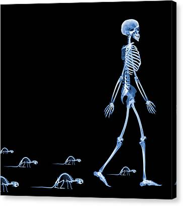 Skeletons Of A Human And Rats, X-ray Canvas Print by D. Roberts