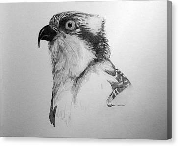 Sketch Of An Osprey Canvas Print by Leslie M Browning