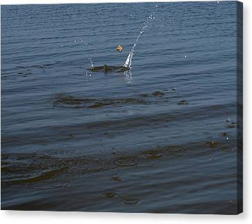 Skipping Stone Canvas Print by Joshua House
