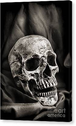 Bones Canvas Print - Skull by HD Connelly