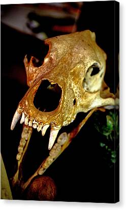 Skull In The Dark Canvas Print by Swainson Holness