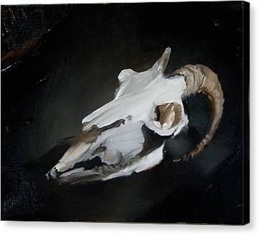 Skull Of Goat Canvas Print