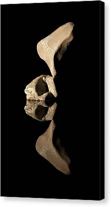 Skull Of Wy Canvas Print by Arlyn Petrie