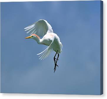 Sky Dancing Canvas Print