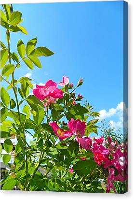 Skyward Roses Canvas Print by Randy Rosenberger