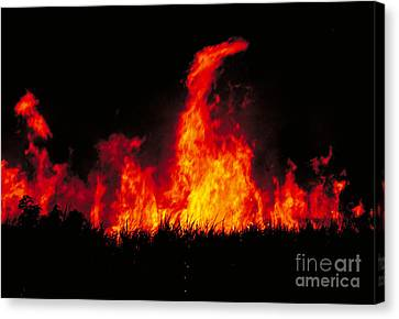 Slash And Burn Agriculture Canvas Print by Dante Fenolio