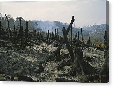 Slash And Burn Agriculture, Where Canvas Print by Konrad Wothe