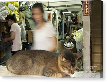 Laundry Mat Canvas Print - Sleeping Cat In Laundry Mat by Sean Stauffer