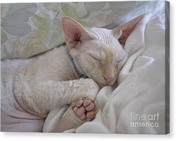 Sleepy Kitty Canvas Print by Glennis Siverson