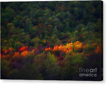 Slice Of Light Evening In Fall Canvas Print by Dan Friend